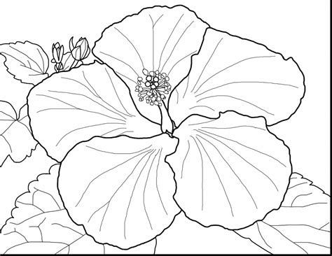 coloring pictures of beautiful flowers spring flower coloring pages coloringsuite com