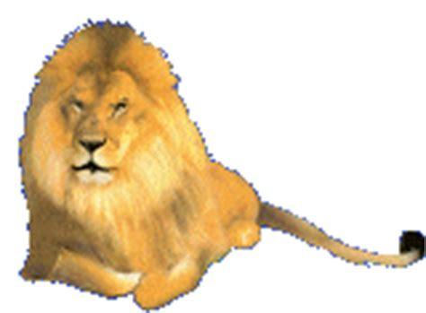 imagenes de leones gif im 225 genes gif de leones 1 de 2
