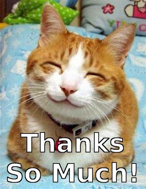Happy Kitten Meme - very happy cat meme by yanito freminoshi whi