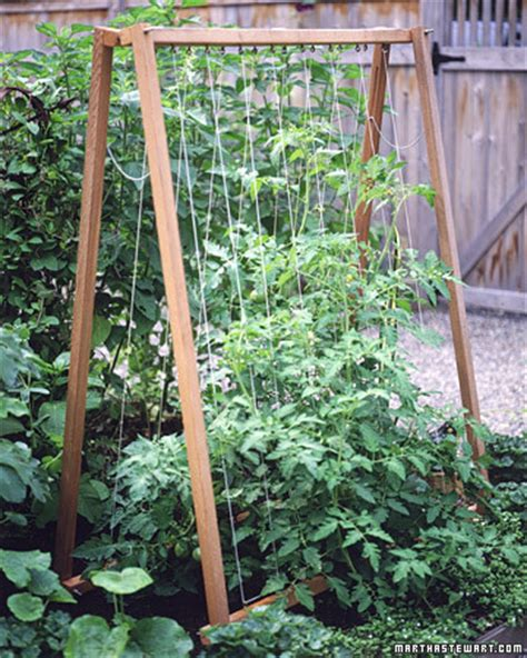 A Frame Trellis Trellis For Dragonflies And Me