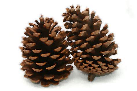 with pine cones pine cone artwork 21 photo tierra este 4545