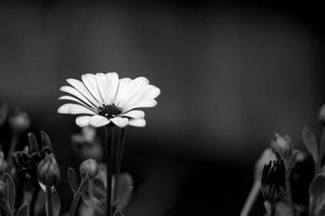 Picture Black And White