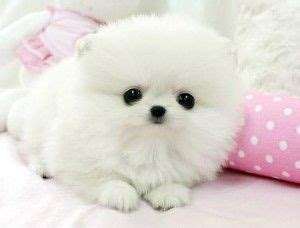 really dogs and puppies halo really dogs and for sale on