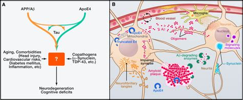 Children Of The Mechanism alzheimer mechanisms and therapeutic strategies cell