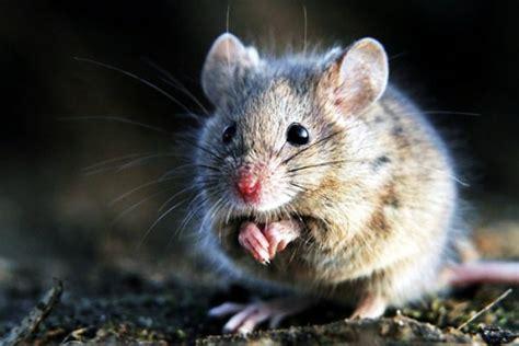 come catturare un topo in cucina quot mettere o ppepe nculo a zoccola quot da dove deriva il