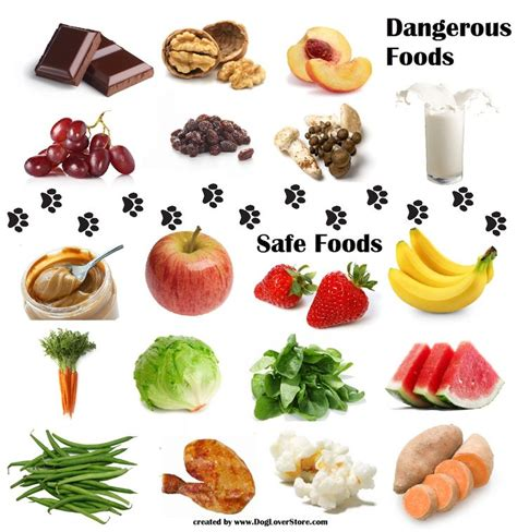 food for dogs dangerous food for dogs safe food for dogs