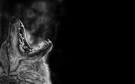 black and white wolf 29 hd wallpaper hdblackwallpaper com wolf pack wallpapers gallery 84 plus juegosrev com