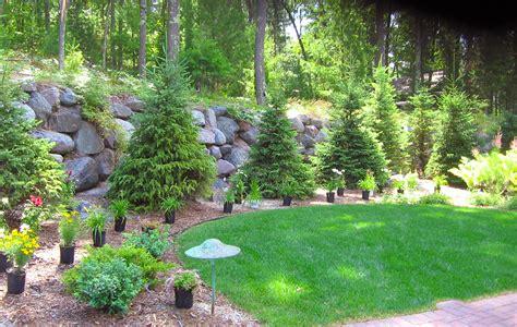 Trees Shrubs Custom Landscaping