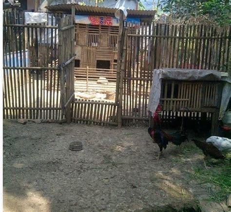 Jaring Paranet Untuk Kandang Ayam blogger barokah cara membuat kanang ayam