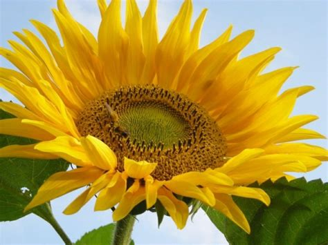 herbstblumen garten deko ideen garten mit herbstblumen f 252 r eine gute stimmung
