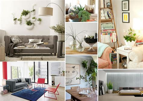 Indoor House Decorations - decorating with houseplants