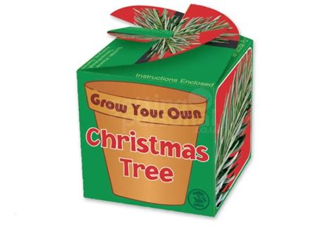 grow your christmas tree company in ca grow your own tree gettingpersonal co uk