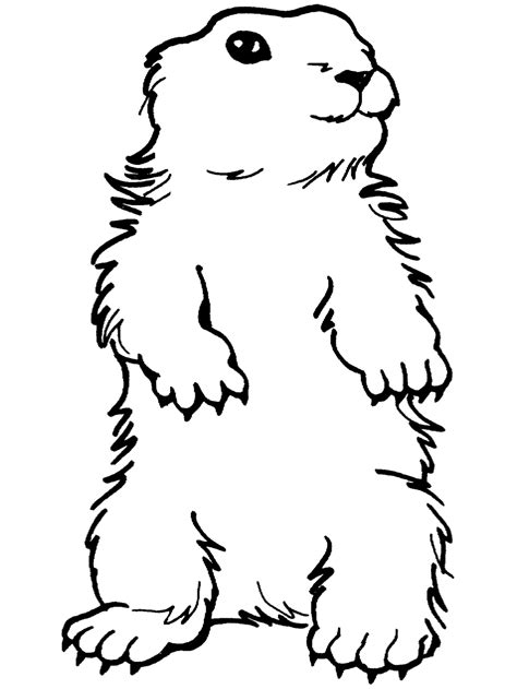 groundhog day coloring page standing groundhog ground