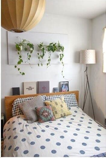 money plant in bedroom 55 easy to maintain beautiful variety of indoor plants to