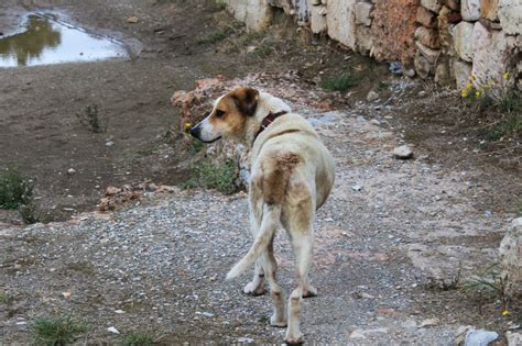 dogs in what s the deal with all those stray dogs in athens bunch of backpackers