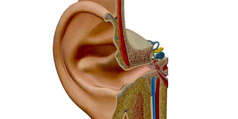 magnomega et oreille sympt 244 mes et traitements