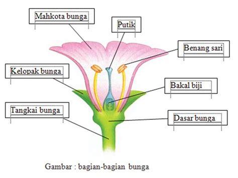 yolanda struktur bunga sempurna