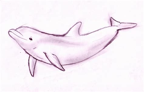 drawn dolphins porpoise pencil and in color drawn