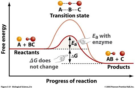 activation energy diagram enzymes biochemistry3rst
