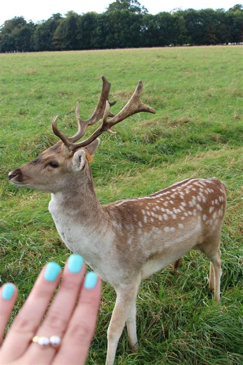 what can i feed the deer in my backyard visting phoenix park dublin sparkles and shoes