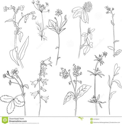 herb garden coloring pages herb coloring pages sketch coloring page