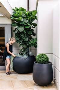 Ideas For Indoor Potted Plants Design 17 Best Ideas About Large Flower Pots On Flower Planters Outdoor Flowers And Large