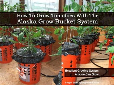 17 best images about container tomatoes on