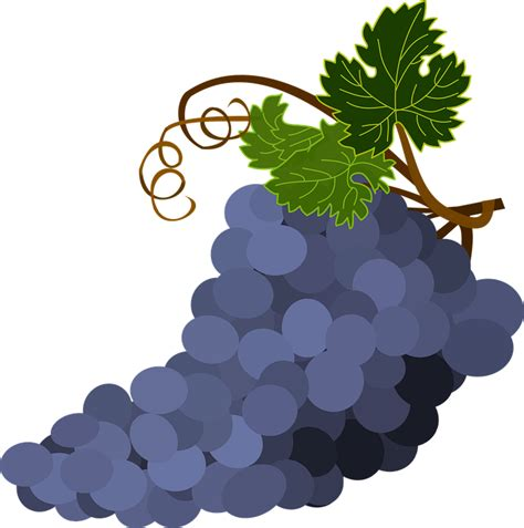 wallpaper daun anggur gambar vektor gratis sekelompok anggur daun anggur