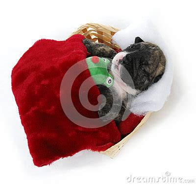 puppy bedtime puppy bedtime royalty free stock photo image 26208635