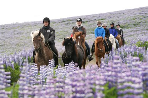 a s ride in iceland books horseback 240 arendi lava cave tour guide to