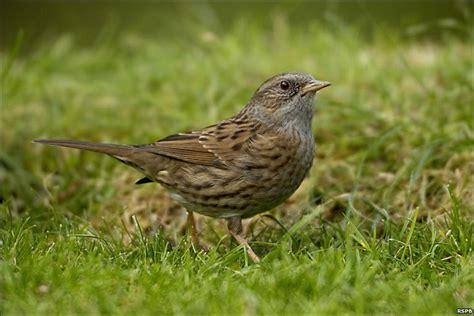 common garden birds images