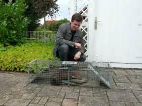 kaninchen im garten vertreiben marder im garten was hilft gef hrlich f r kaninchen sind