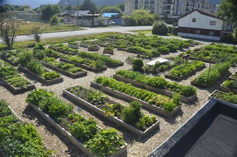 Beautiful Beds by Squamish Can Grow Community Gardens Squamish Can
