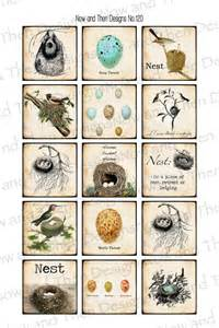 for mom s sunroom birds nests bird houses pinterest