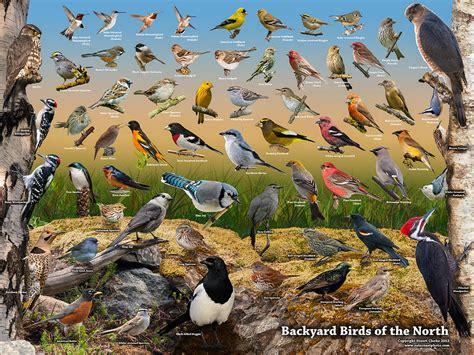 backyard birds of backyard birds of the photograph by stuart clarke