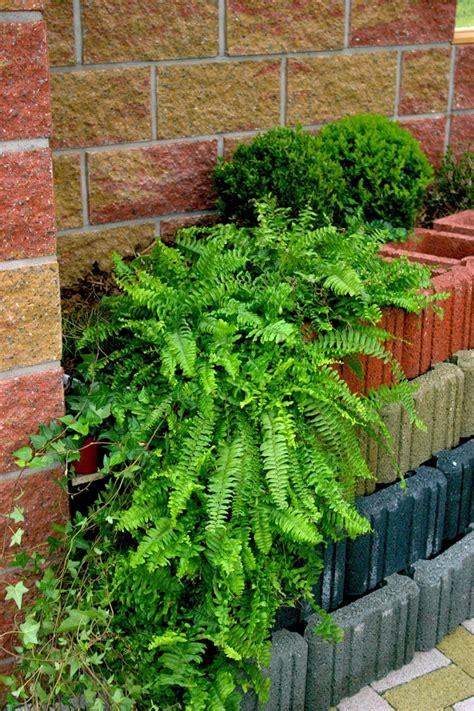 Garten Gestalten Rechteckig by Pflanzsteine Setzen Und Bepflanzen Gartengestaltung Ideen