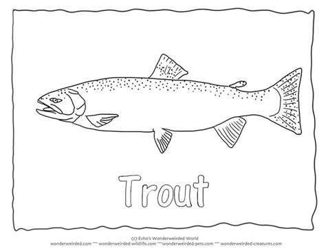 lake fish coloring pages 10 best images about coloring pages on pinterest animals