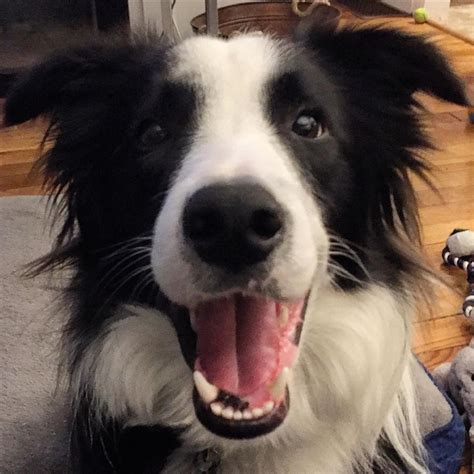 imagenes de animales para descargar imagenes de perros sonriendo para descargar im 225 genes