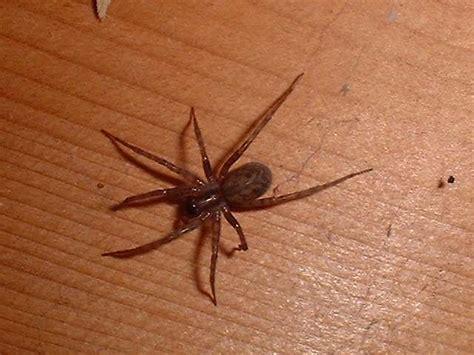 scorpioncini in casa come vincere la paura degli insetti wellness e salute