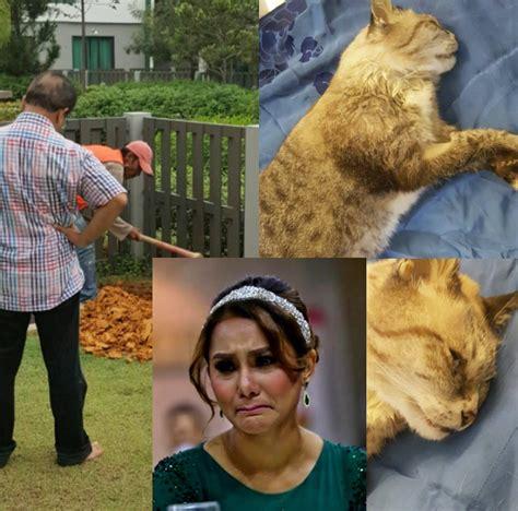 Kucing Lina 17 tahun bersama kucing kak lina pom pom pergi buat