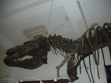 Fosil Gajah Daging apakah unsur matematika di museum geologi bandung