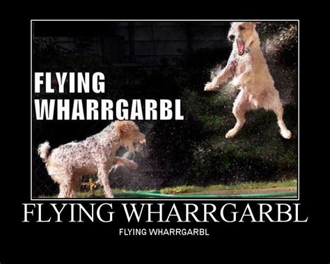 Dog Sprinkler Meme - image 32391 wharrgarbl sprinkler dog know your meme