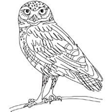 realistic owl coloring page snowy owl printable pages realistic coloring pages
