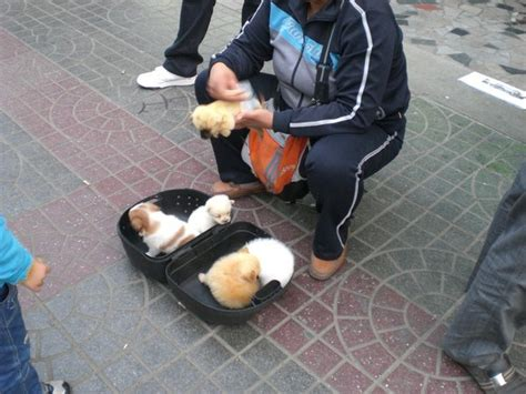 woman selling  cute puppies   street photo