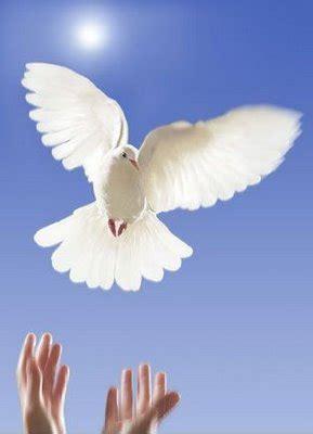 imagenes de luto con palomas la paloma 2
