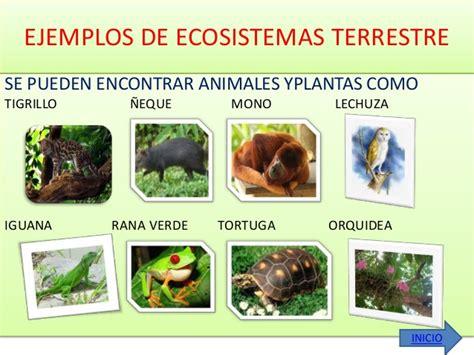 100 ejemplos de animales terrestres y acuticos biodiversidad y ecosistemas tropicales microclase marelis