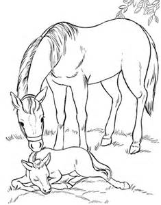 mare foal coloring amp coloring book