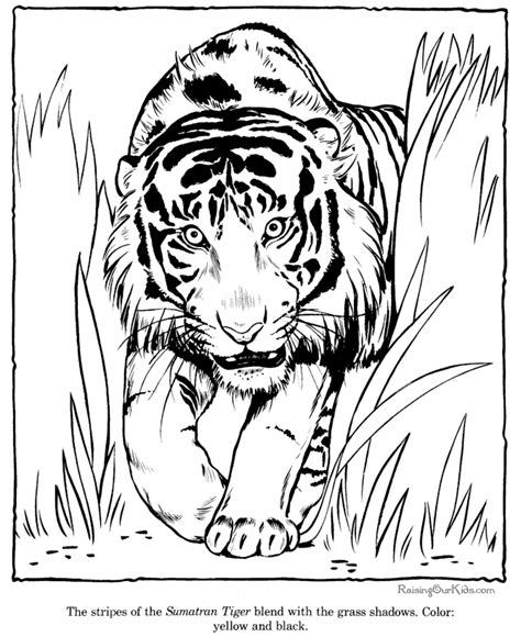 advanced tiger coloring pages free coloring pages of tiger mandala