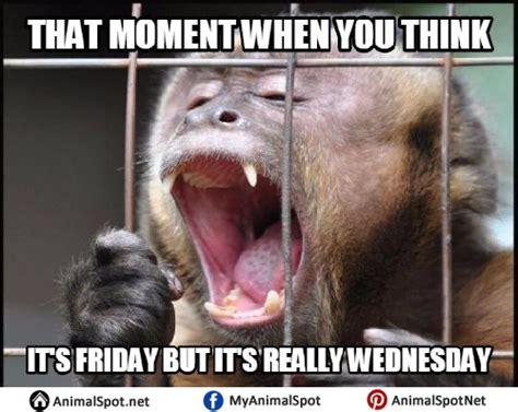 Monkey Meme - monkey smiling meme