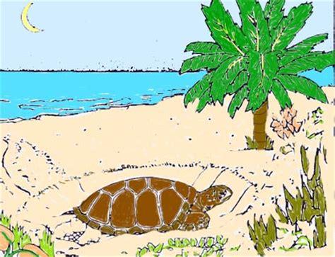 isla de mona de puerto rico florafauna datos 83 informacion de los llanos costeros de puerto rico